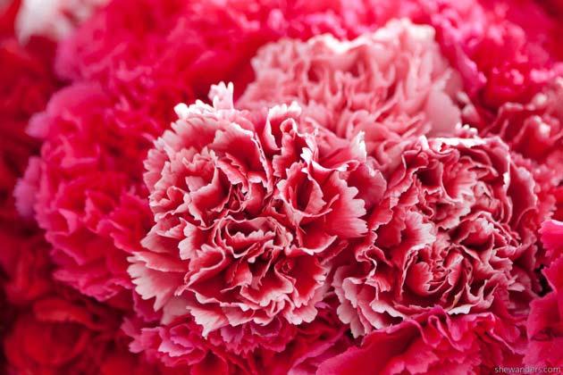 carnation florals